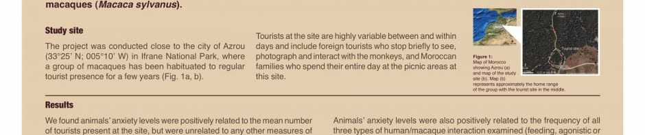 Impacts of tourism on anxiety and physiological stress among wild Barbary macaques in Morocco