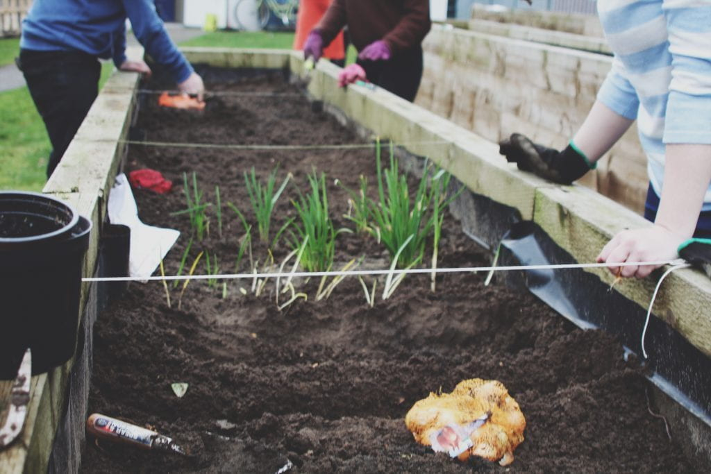 Image of persons gardening and planting in the kitchen garden beds.