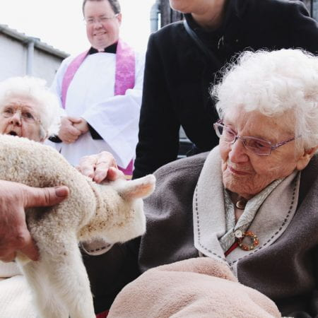 Image of a person in a wheelchair stroking a lamb