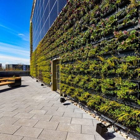 Image of a roof garden, a living wall featuring many plants and also solar panels hugs the side of the building.