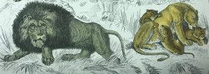 illustration of two lions, one crouching facing left, and a lioness surrounded by three cubs