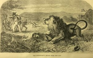 a black and write print of a man tying prone with a lion pouncing on his back