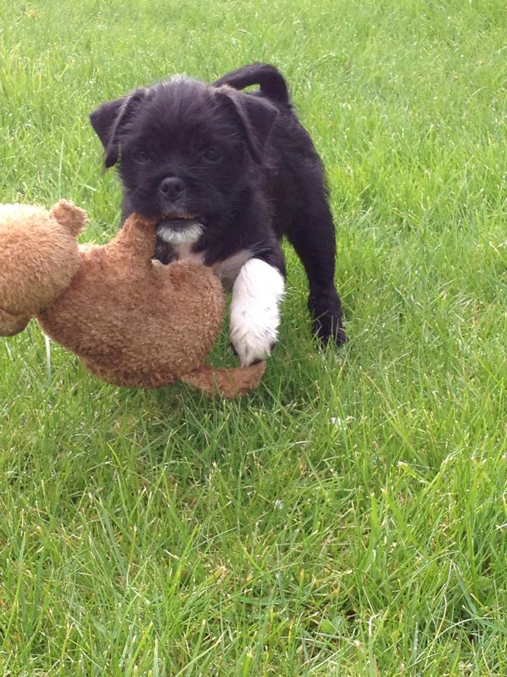 Badger with his bear