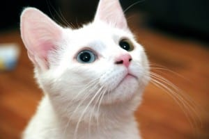 I couldn't find a suitable public domain picture about the topic, so here's a nice picture of a kitten instead