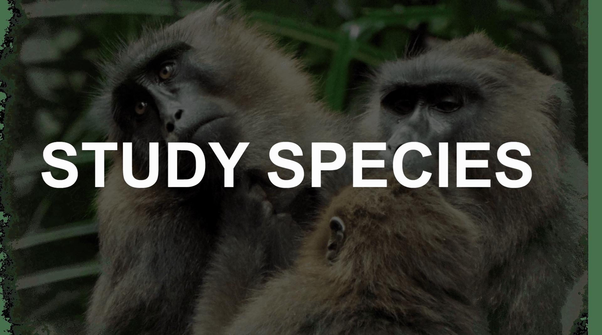 Study species