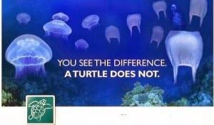Jellyfish_vs_plastic_bag_1-600x0