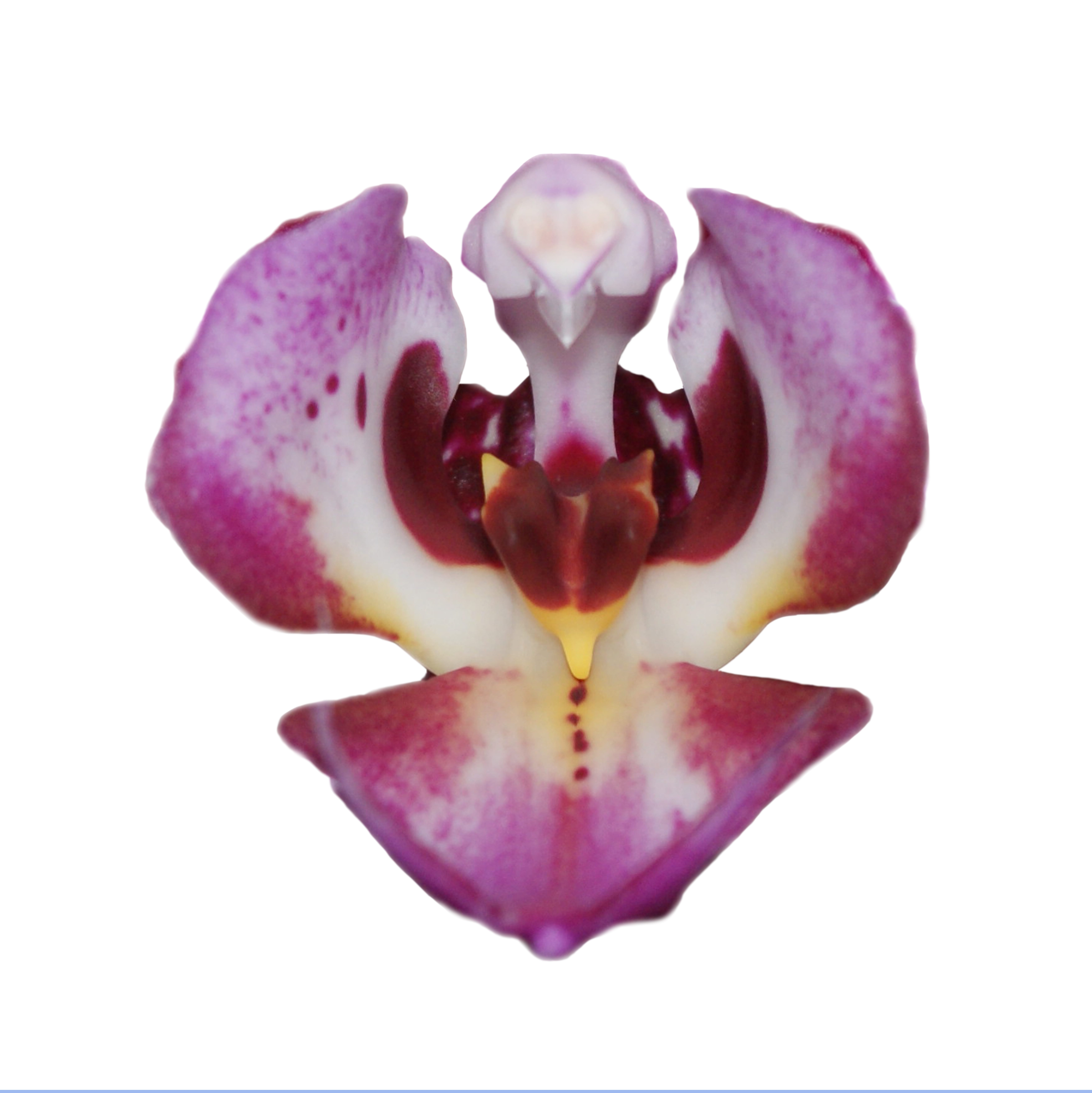 Orchid 2g my attempts to diminish the stereotypical view of women as sexual objects by turning the vagina into a symbol that represents strength and womanhood biocorpaavc