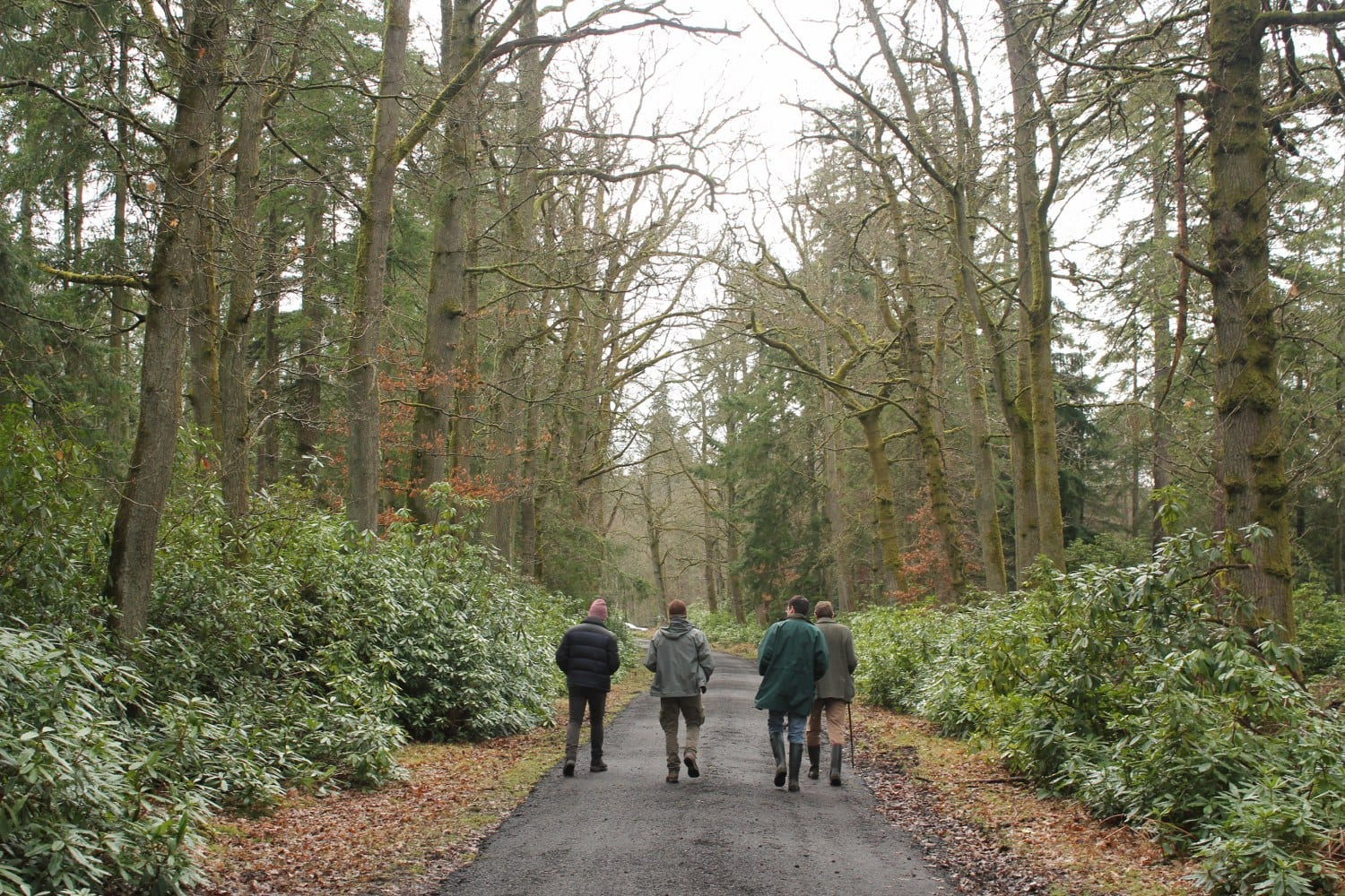 WOODLAND TRUST TO BRING THE CHARTER FOR TREES, WOODS AND PEOPLE TO LIGHTS