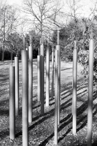 Caroline Locke, The Frequency of Trees (2012)