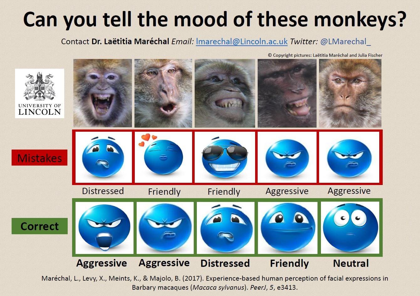 Monkey Moods