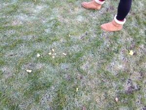 Lemon Skin or Broken Foam Ball