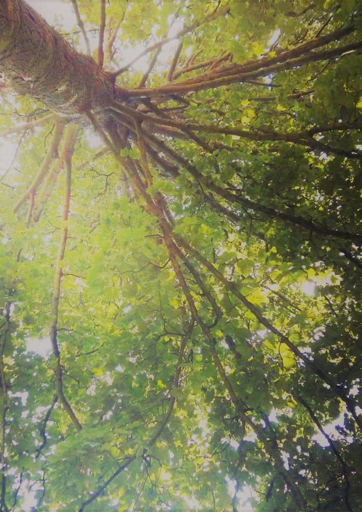Tree of Knowledge TIFF Leah Wood 2