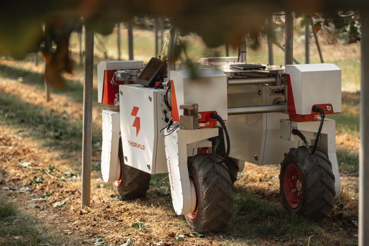 Thorvald Robot in strawberry field
