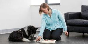 Dog traininer explaining to dog