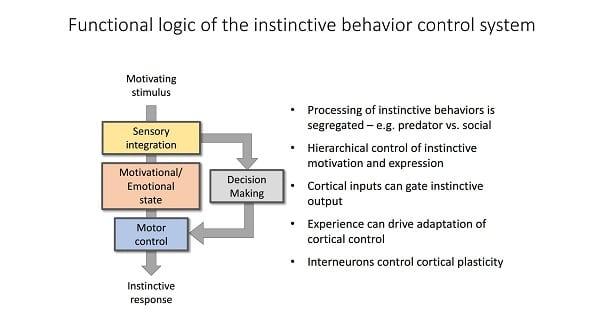 sensory input motor output