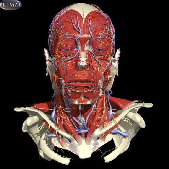 Primal Pictures interactive human anatomy database | Library news ...