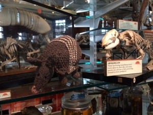 Knitted armadillo on display at Grant Museum  (C) Grant Museum