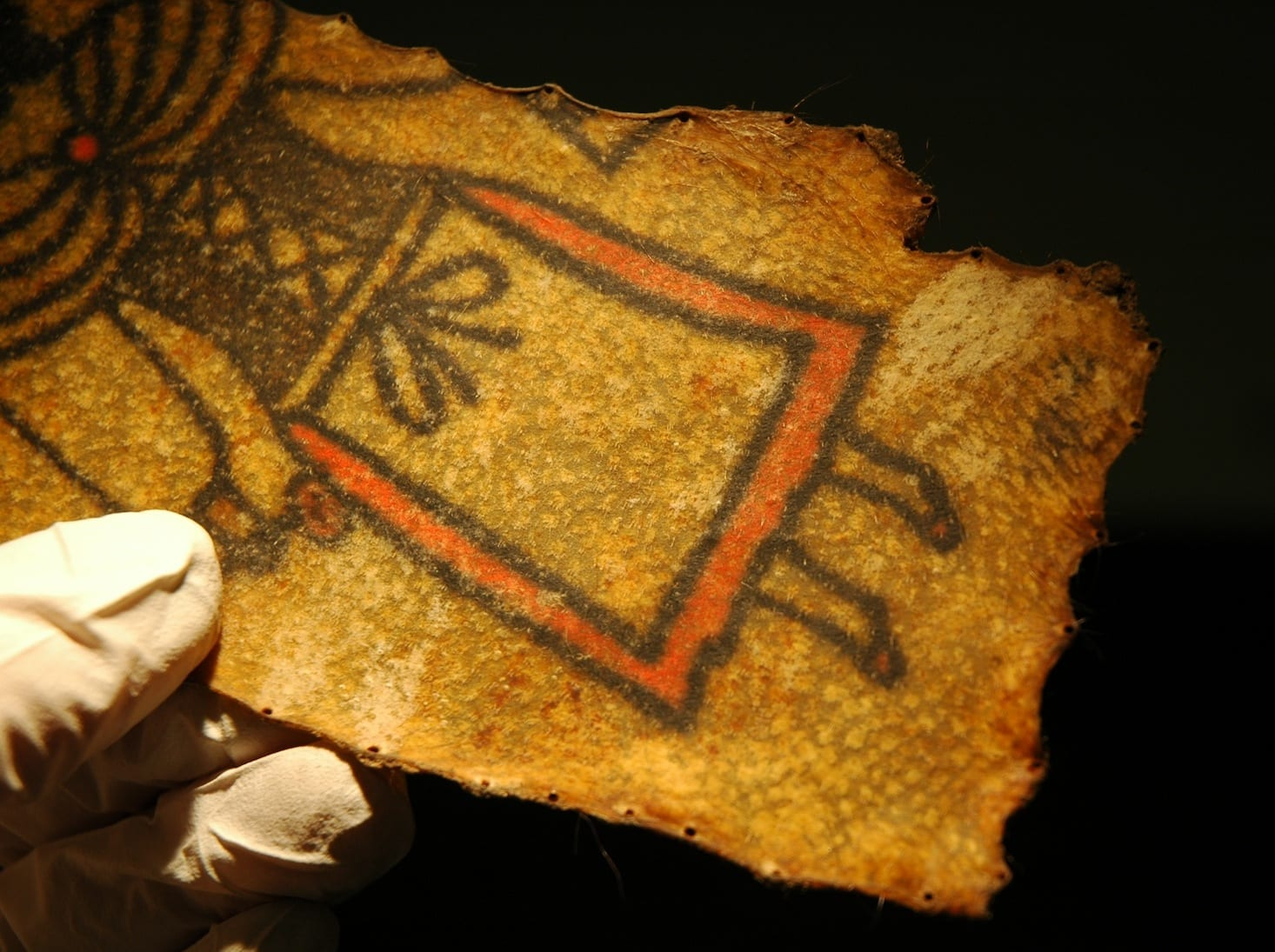 Preserved Tattooed Skin Ucl Researchers In Museums