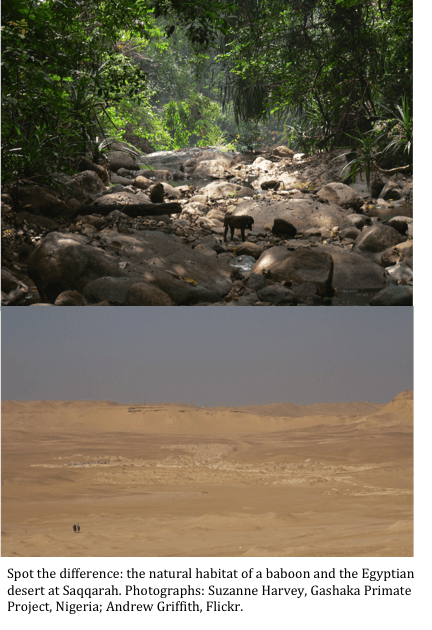 Baboon environment