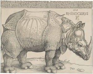 Dürer's Rhinoceros - 1515