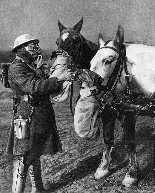 Horses in gas masks. Sadly, they often confused these with feed bags and proceeded to eat them. Credit Great War Photos.