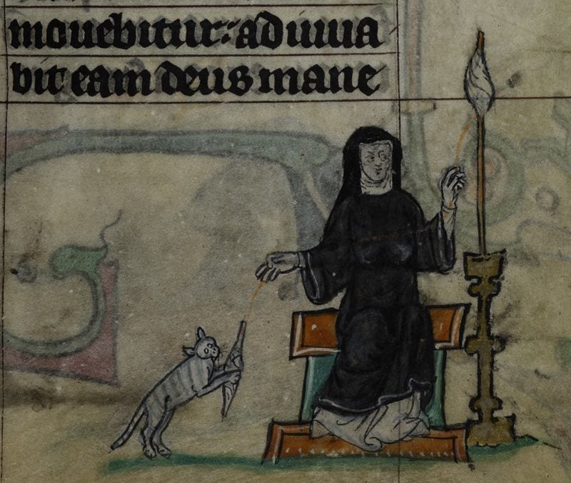 A cat playing with nun's spindle