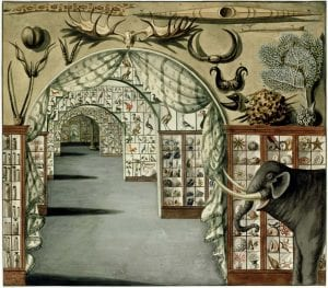 Perspective interior view of Sir Ashton Lever's Museum in Leicester Square, London March 30 1785. Watercolour by Sarah Stone. Photo credit: State Library of New South Wales.