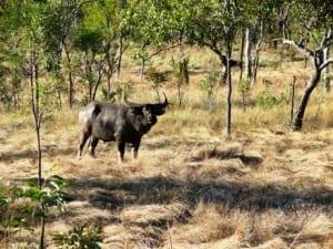Buffalo checking us out