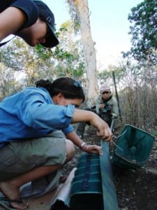 Carefully handling a funnel trap containing a brown snake