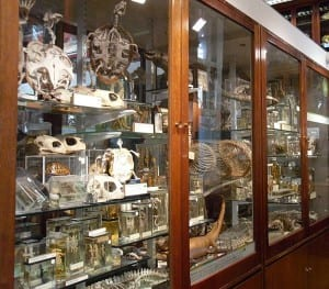Grant Museum of Zoology and Comparative Anatomy: Reptile Case