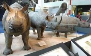 Rhinos at the Natural History Museum (Now all with fake horns)