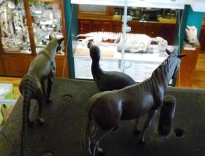 Image of the new models of Quagga, Dodo and Thylacine in the Grant Museum