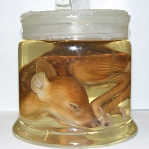 Is this deer pickled or preserved in fluid?