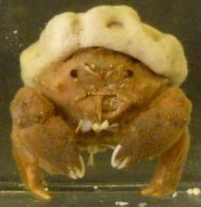 Close up of Mr S. Crab