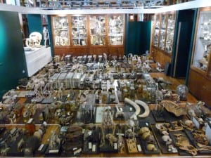 1000 specimens on the floor