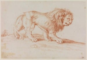 UCL Art Museum EDC 4766 Anonymous (Dutch, late 17th Century), Lion in a Landscape, late 17th century Red chalk on paper