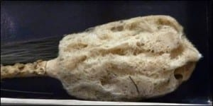Tip of glass rope sponge