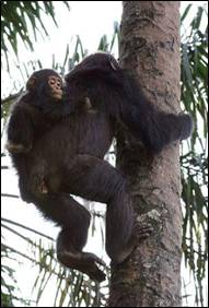 Impressive climbing skills