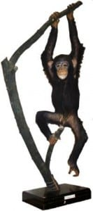 Taxidermy chimp at the Grant Museum of Zoology