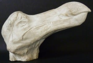Dodo head cast (Raphus cucullatus) at the Grant Museum of Zoology. LDUCZ-Y86