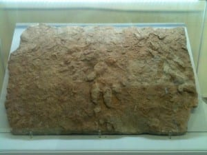 Image of the Chirotherium footprint on display in the Rock Room