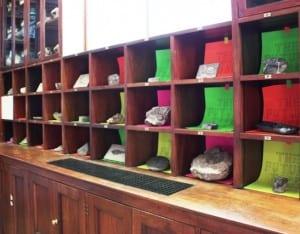 Grant Museum pigeon holes
