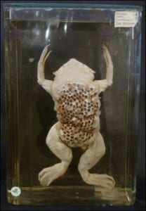 The other side of the toad is a different story