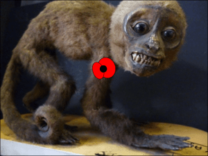 Scary Monkey proudly displaying his poppy