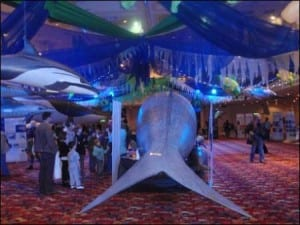 The tail of the blue whale at WhaleFest 2012. Image by Emma-Louise Nicholls