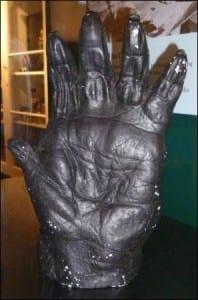 Western gorilla hand cast (Gorilla gorilla) at the Grant Museum. LDUCZ-Z467