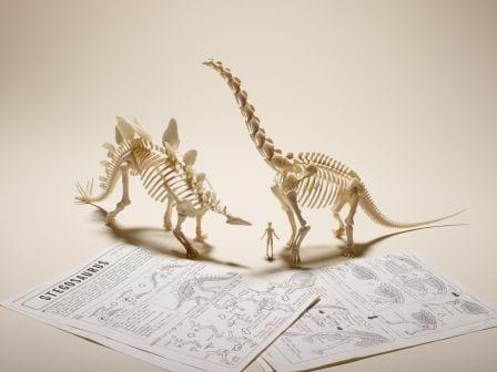 Grant Museum dinosaur models