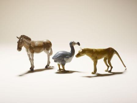 Grant Museum quagga, dodo and thylacine models