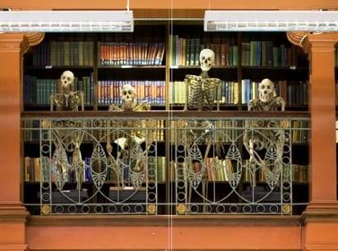gmz ape skeletons