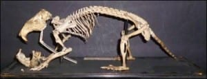 Eastern pocket gopher skeleton (Geomys sp) at the Grant Museum of Zoology. LDUCZ-Z2794